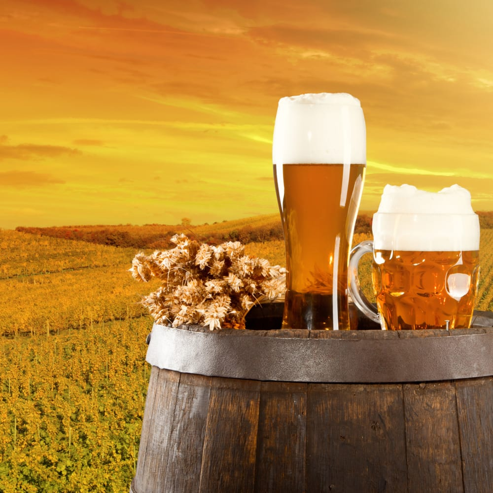 Accelerated nitrogen & protein determination in beer and malt