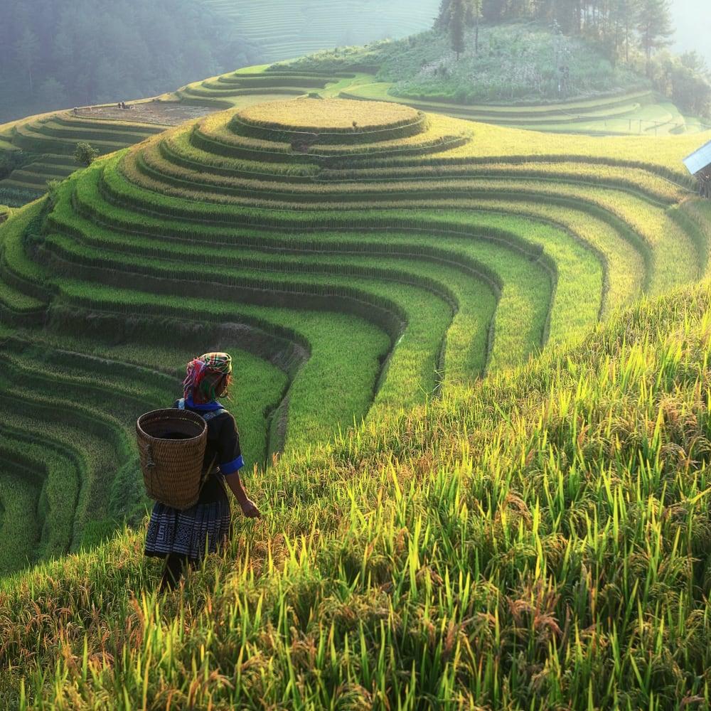 Nitrogen and protein determination in rice