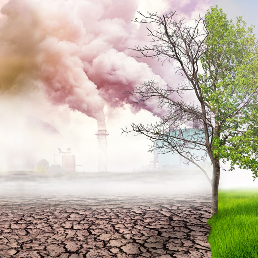 Extraction Adviser for Environmental Samples